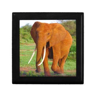 Beautiful Orange Elephant Gift Box