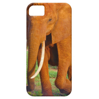 Beautiful Orange Elephant iPhone 5 Case