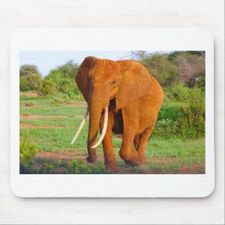 Beautiful Orange Elephant Mouse Pad