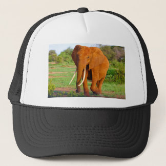Beautiful Orange Elephant Trucker Hat