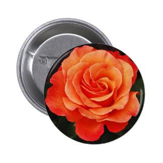 Beautiful orange rose petals print pins