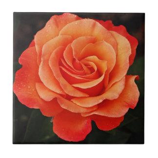 Beautiful orange rose petals print small square tile
