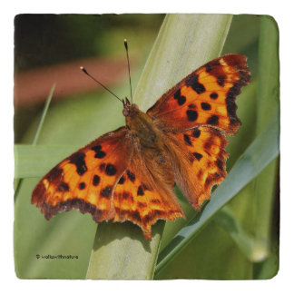 Beautiful Orange Satyr Comma Butterfly Trivet