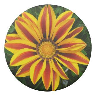 Beautiful Orange Sun Flower Photo Eraser