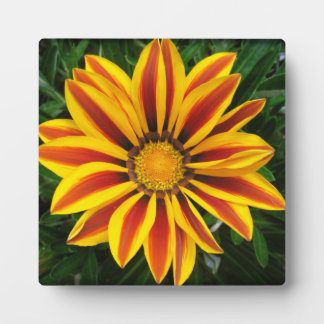 Beautiful Orange Sun Flower Photo Plaque