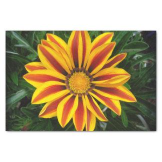Beautiful Orange Sun Flower Photo Tissue Paper