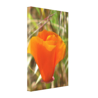 Beautiful Orange Yellow Flower Stretched Canvas Prints