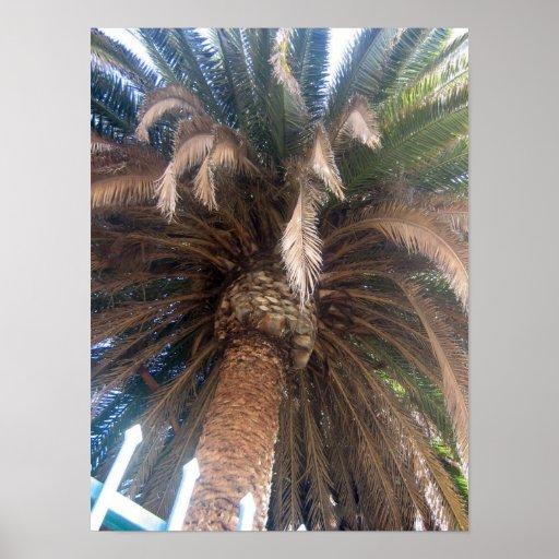 Beautiful Palm Tree Posters