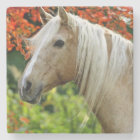 Beautiful Palomino Draught   Horse Stone Coaster