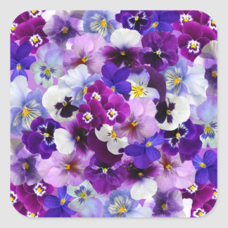 Beautiful Pansies Spring Flowers Square Stickers