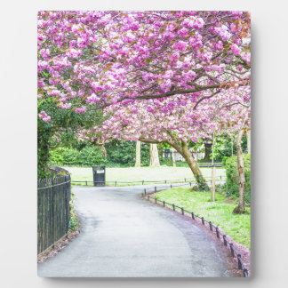 Beautiful park during the spring photo plaque