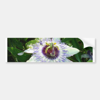 Beautiful Passion Flower With Garden Background Bumper Stickers