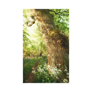 Beautiful path through spring woodland canvas print