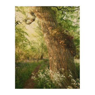 Beautiful path through spring woodland wood wall decor