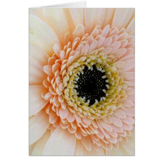 Beautiful Peach/Cream Gerber Greeting Card
