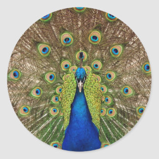 Beautiful peacock and tail feathers print round sticker