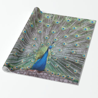 Beautiful Peacock Bird Plumage Colorful Feather Wrapping Paper