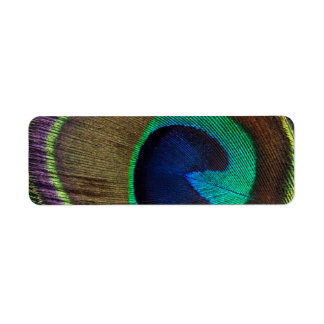 Beautiful Peacock Feather Return Address Label