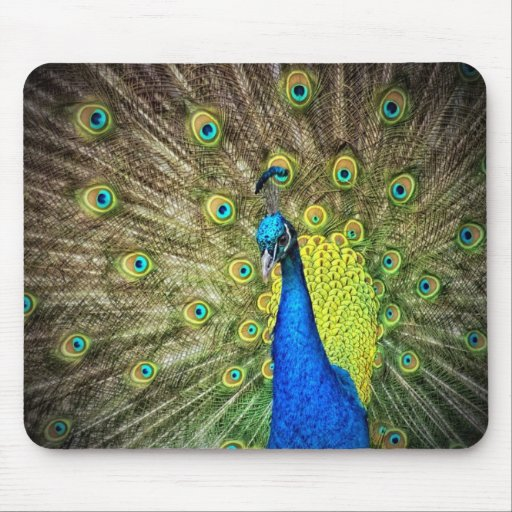 Beautiful Peacock Photo Mouse Pads