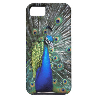 Beautiful peacock spreading colourful feathers case for the iPhone 5