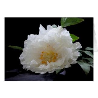 Beautiful Peony Blossom Card