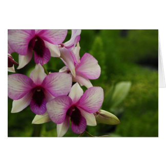 Beautiful Phalaenopsis Card