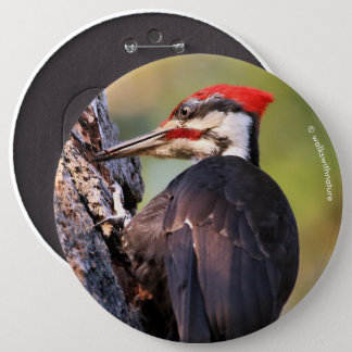 Beautiful Pileated Woodpecker on the Tree 6 Cm Round Badge