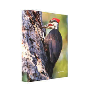 Beautiful Pileated Woodpecker on the Tree Canvas Print