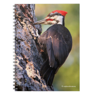 Beautiful Pileated Woodpecker on the Tree Notebook