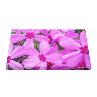 Beautiful Pink and Purple Spring Phlox Flowers Canvas Print