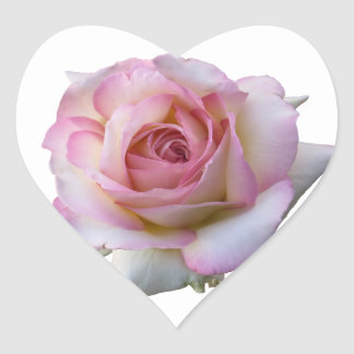 Beautiful Pink and White Heart Rose Sticker
