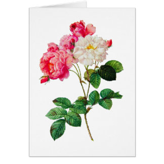 Beautiful Pink and White Roses by Redoute Card