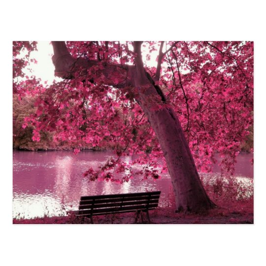 Beautiful Pink blooms everywhere Postcard