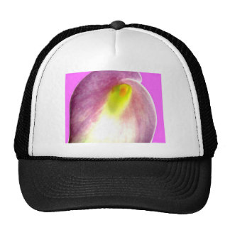 Beautiful pink calla lily flower close up view trucker hats