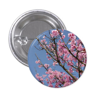 Beautiful pink cherry blossoms and blue sky buttons