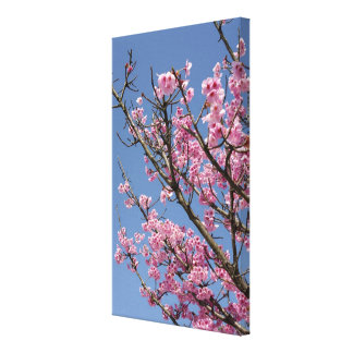 Beautiful pink cherry blossoms and blue sky gallery wrapped canvas