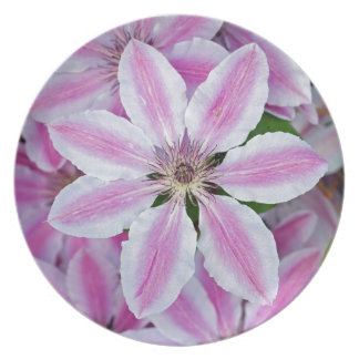 Beautiful pink clematis flowers party plate