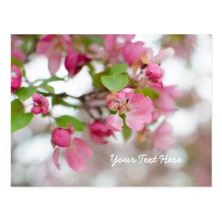 Beautiful Pink Crab Apple Blossom Postcard