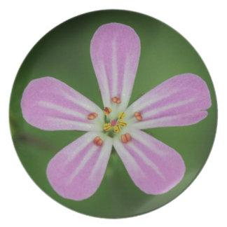 Beautiful pink cranesbill flower plates