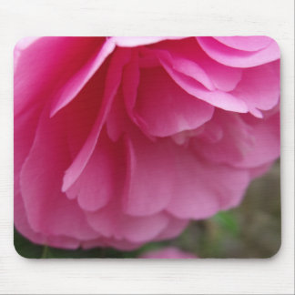 Beautiful Pink Flower - Camellia Mouse Pad