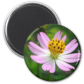 Beautiful pink flower magnet