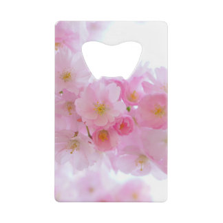 Beautiful Pink Japanese Cherry Blossom Bloom