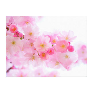 Beautiful Pink Japanese Cherry Tree Blossom Canvas Print