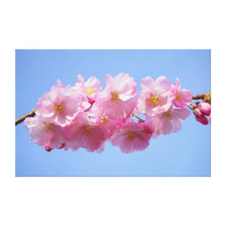 Beautiful pink Japanese cherry tree blossom flower Canvas Print