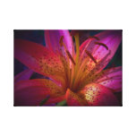 Beautiful Pink Lily Stretched Canvas Print