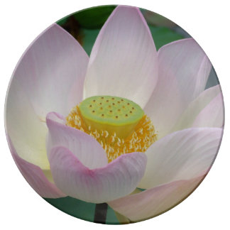 Beautiful pink lotus flower porcelain plate