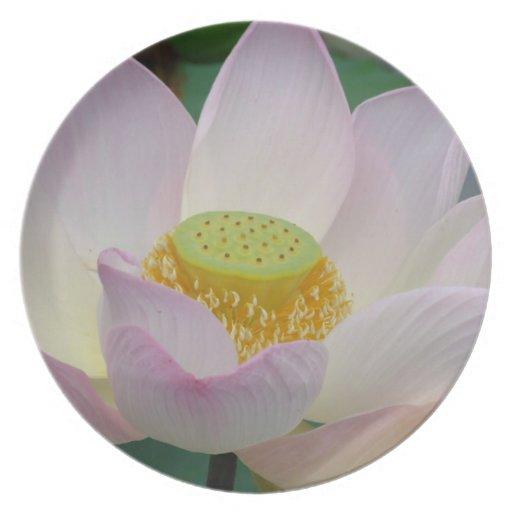 Beautiful pink lotus flower dinner plates