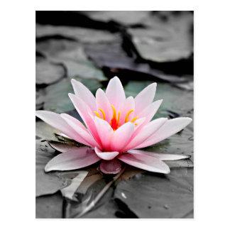 Beautiful Pink Lotus Flower Waterlily Zen Art Postcard