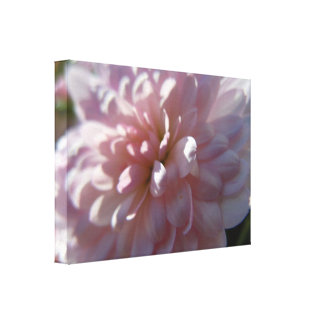 Beautiful Pink Mum Canvas Print