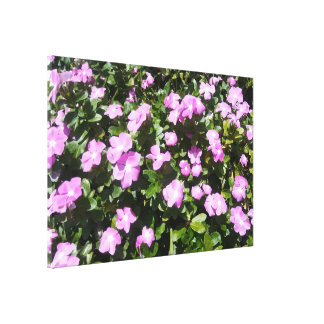Beautiful Pink Periwinkle Flowers Print Huge